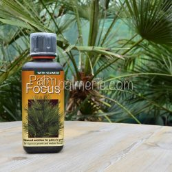palmfocus_palmerie_palm_focus